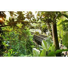Kayumanis Ubud bridge   #KayumanisExperience