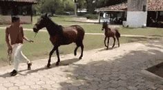 Funny Horse Trot