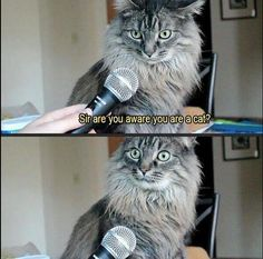 Sir are you aware you are a cat? - credit to: swipurr.com