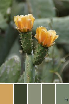 ZJ Colour Palette 525 #colourpalette #colourinspiration