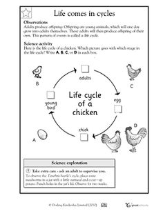 bbc science dandelion life cycle worksheet science babies and life cycles. Black Bedroom Furniture Sets. Home Design Ideas
