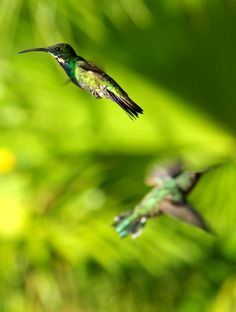 Very excited to get my hummingbird portfolio launched!