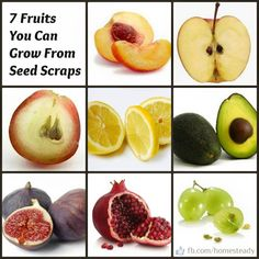 Fruits that grow from seed scraps! Must try www.draxe.com #healthy #gardens #fruits