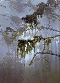 Recherche forêt