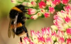 Bioelectromagnetics: Bees & Flowers Communicate Using Electrical Fields, Scientists Find