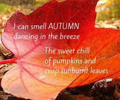 can smell autumn dancing in the breeze. The sweet chill of pumpkins and crisp sunburndt leaves Autumn Day, I Fall, Autumn Leaves, Winter, Hello Autumn, Mabon, Foto Gif, Chill, Autumn Scenes