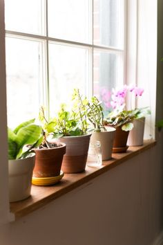 love the sunlight shinning the potted plants