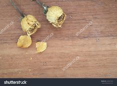 Dry Roses On Wood Background Stock Photo 263651945 : Shutterstock