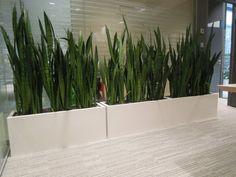 Bílé truhlíky Plants, Plant, Planets