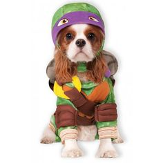 The Top Halloween Costumes for Dogs this Year @poshonabudget http://poshonabudget.com/2016/09/the-top-halloween-costumes-for-dogs-this-year.html