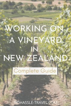 Thinking about working on a vineyard in New Zealand? Our guide has everything you need to know to get started and what to expect. #vineyard #NewZealand