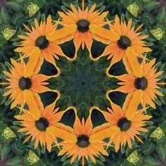 Image result for ap art concentration oranges