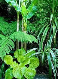jungle plant - Google Search