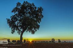 AMANECER by josetxu  amanecer beautiful beauty blue green naturaleza paisaje sky spain summer sun sunrise travel tree tre