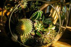 Mini jardins em recipientes de vidro ou cerâmica, os terrários são lindos e cada vez mais populares. Além disso necessitam de pouca rega e podem ficar dent