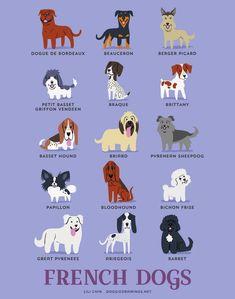 ¿Sabes cuáles son los perros procedentes de Latinoamérica? ¿No? Pues la siguiente serie de ilustraciones te dará un tour geográfico a través de los países de origen de más de 150 razas perros. En México predomina el Xoloitzcuintle.