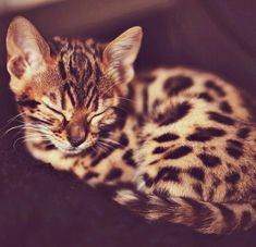I hate cats, but this one is so cute!