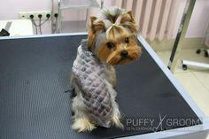 Креативные стрижки - оригинальный способ преобразить и украсить собаку
