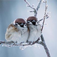 Photo by arne. Pretty Birds, Cute Birds, Beautiful Birds, Animals Beautiful, Bird Pictures, Animal Pictures, Animals And Pets, Cute Animals, Photo Animaliere