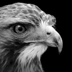 retratos de animales en cautividad en blanco y negro