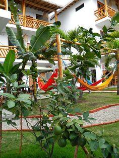 La Mariposa Hostal Olon Playas de Ecuador  #hospedaje #hosteria #Olon #playas http://lamariposahostal.com/