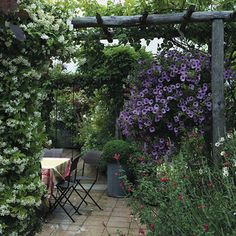 You can find me here in the morning, having coffee and deadheading my flowers