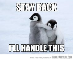 pictures of baby penguins funny