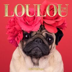 This book is only available via Amazon.com (by clicking you will be redirected) Loulou the Pug is a combination of Loulou's most liked pictures on Instagram and some new shots that will definitely mak