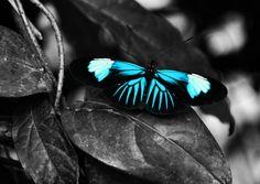 Bright Butterfly by damammatess on Etsy, $5.00  memoriesbytessa.com