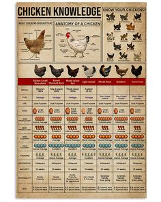 Knowledge Chickens shirts, apparel, posters are available at Ateefad Outfits Store. Raising Backyard Chickens, Backyard Chicken Coops, Keeping Chickens, Chicken Coop Plans, Diy Chicken Coop, Backyard Farming, Pet Chickens, Mini Farm, Chicken Breeds