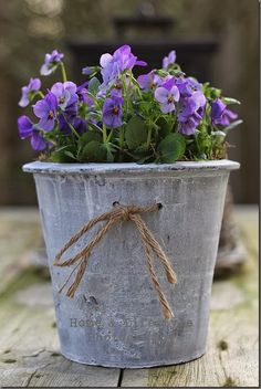 purple flowers in violet-grey container ...