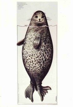HEY LOOK! I'm a ringed seal! I knew it. This is a Saimaa Ringed Seal from Lake Saimaa in Finland. Seal Cartoon, Cartoon Art, Graphic Design Illustration, Graphic Art, Illustration Art, Animal Paintings, Under The Sea, Finland, Painting & Drawing