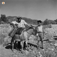 Trasporto di bidoni di DDT su un asino, 1950   by Suschitzky Wolfgang #sardegna #sardinia