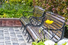 A park bench in San Francisco CA. A beautiful place to rest.