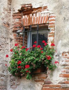 """""""window pride"""" ~ Isn't it great how every French window sill is deemed worthy of adorning with flowers? Window Boxes, Window Sill, Old Windows, Windows And Doors, Red Geraniums, Garden Windows, Window Dressings, Through The Window, Old Doors"""
