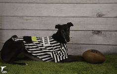 Silent Sunday 2/5 - The Rufferee - Tales and Tails