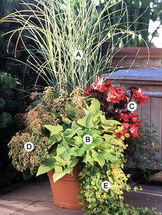A. Maiden grass (Miscanthus sinensis 'Morning Light') -- 1  B. Sweet potato vine (Ipomoea batatus 'Margarita') -- 2  C. Wax begonia (Begonia 'Vodka') -- 2   D. Coleus (Solenostemon 'Olympic Torch') -- 1  E. Creeping Jenny (Lysimachia nummularia 'Aurea') -- 2