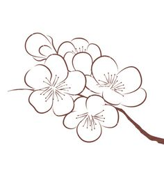 Cherry blossom vector by CatChat on VectorStock®
