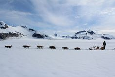 An unforgettable experience, dogsledding on a glacier