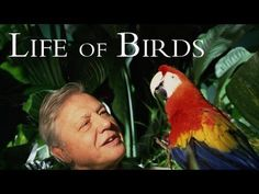 Life of Birds: Meat Eaters -From meat eating parrots in New Zealand to massive eagles that catch monkeys and flamingoes in Africa, David Attenborough looks at the dramatic ways in which these birds hunt their prey. To hunt, birds need super-senses and great skill. Some birds use exceptional hearing to track down their prey, while others use their supreme vision or a heightened sense of smell.