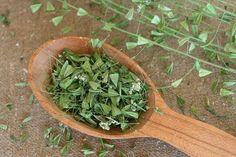 Čerstvé srdcovité kapsičky so semenam Korn, Vertigo, Kraut, Botany, Health Fitness, Herbs, Sang, Garden, Anatomy