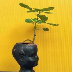 Fleur de cerveau.(poème en cours)  Le rêveur. The dreamer. J'ai mis de la terre dans cette tête en poterie et ai attendu qu'une idée germe, qu'une fleur colonise cet étroit espace...une impatiente de Balfour s'est installée...rien que le nom est un rêve.  copyright @monsieurhaiku2017  #monsieurhaiku #notebook #brain #flowerstagram #sculpture #poetry #installation #greenart #poesie #poeme #poete #recueilpoésie #poetofinstagram #flowerpower #dreamcatcher #rêve
