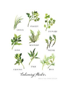 Culinary Herbs Illustration Art Print by Yao Cheng Design Art And Illustration, Botanical Illustration, Botanical Prints, Watercolor Illustration, Food Illustrations, Floral Prints, Watercolor Food, Watercolor Projects, Watercolor Leaves