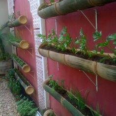 Reaproveitar os materiais é uma ótima escolha para construir a horta em casa e sem gastar muito. Afinal além de se alimentar bem, também é interessante economizar! E o bambu é uma ótima escolha para quem quer uma ideia criativa e barata!!! Imagens da Internet créditos-http://www.meumundoverde.com/vasos-horta-plantas-em-bambu-sem-gastar/
