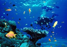 3. get my scuba diving license