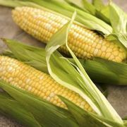 How to Cook Corn on the Cob in the Microwave | eHow