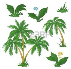 Palm trees, flowers and green grass on white background.