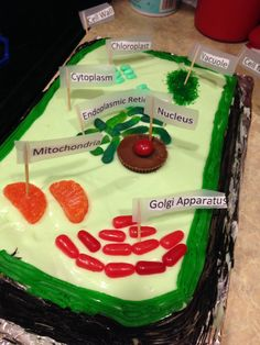 Edible plant cell cake- key lime cake & candy