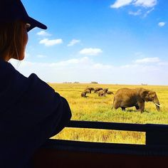 Nowhere else in this world will you get to see the wildlife so beautifully as you can see in Serengeti National Park. Photo credit: @urtuxee  #instagood #volunteerwork #iamvolsoler #volunteering #traveler #elephants #serengetinationalpark #tanzania #safari #wildlife #wildlifephotography #instadaily #natgeo #condenast #travelbug #travel #wanderlust