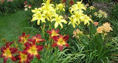 – Gardening Tips Flower Garden Plans, Pergola, Flowers, Vegetable Garden Design, Attached Pergola, Pergola Designs, Flower Garden, Garden Planning, Garden Design